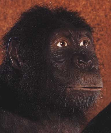 Homo erectus 1995 by joe damato - 3 part 9