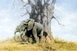 Baobab and Friends - David Shepherd