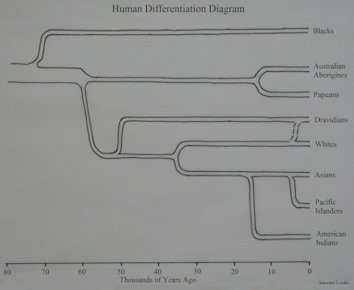 Human Differentiation Diagram